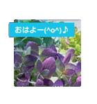 紫陽花と日常の挨拶(個別スタンプ:02)