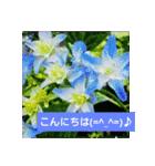 紫陽花と日常の挨拶(個別スタンプ:03)