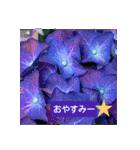 紫陽花と日常の挨拶(個別スタンプ:05)