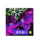 紫陽花と日常の挨拶(個別スタンプ:06)