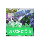 紫陽花と日常の挨拶(個別スタンプ:08)