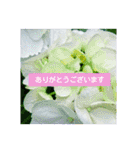 紫陽花と日常の挨拶(個別スタンプ:09)