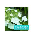 紫陽花と日常の挨拶(個別スタンプ:11)