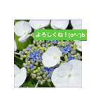 紫陽花と日常の挨拶(個別スタンプ:13)