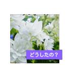 紫陽花と日常の挨拶(個別スタンプ:14)