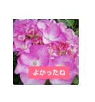 紫陽花と日常の挨拶(個別スタンプ:15)