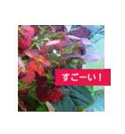 紫陽花と日常の挨拶(個別スタンプ:16)