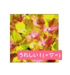 紫陽花と日常の挨拶(個別スタンプ:18)