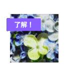 紫陽花と日常の挨拶(個別スタンプ:19)