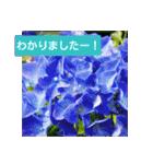 紫陽花と日常の挨拶(個別スタンプ:20)