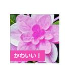 紫陽花と日常の挨拶(個別スタンプ:27)