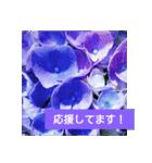 紫陽花と日常の挨拶(個別スタンプ:29)