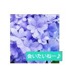 紫陽花と日常の挨拶(個別スタンプ:30)