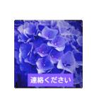 紫陽花と日常の挨拶(個別スタンプ:32)