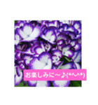 紫陽花と日常の挨拶(個別スタンプ:33)