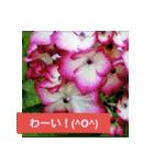 紫陽花と日常の挨拶(個別スタンプ:35)