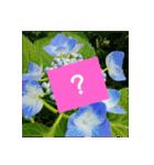 紫陽花と日常の挨拶(個別スタンプ:36)
