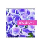 紫陽花と日常の挨拶(個別スタンプ:37)