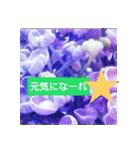 紫陽花と日常の挨拶(個別スタンプ:38)