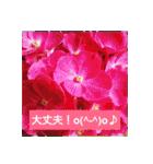 紫陽花と日常の挨拶(個別スタンプ:40)
