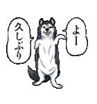 NINKU -忍空-(J50th)(個別スタンプ:38)