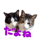 猫の顔相づちスタンプ~大きな手書き文字~(個別スタンプ:06)