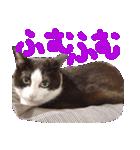 猫の顔相づちスタンプ~大きな手書き文字~(個別スタンプ:10)