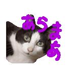 猫の顔相づちスタンプ~大きな手書き文字~(個別スタンプ:12)