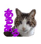 猫の顔相づちスタンプ~大きな手書き文字~(個別スタンプ:14)