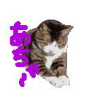 猫の顔相づちスタンプ~大きな手書き文字~(個別スタンプ:15)