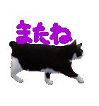 猫の顔相づちスタンプ~大きな手書き文字~(個別スタンプ:16)