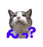 猫の顔相づちスタンプ~大きな手書き文字~(個別スタンプ:19)