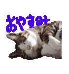 猫の顔相づちスタンプ~大きな手書き文字~(個別スタンプ:20)