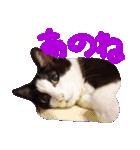 猫の顔相づちスタンプ~大きな手書き文字~(個別スタンプ:21)