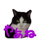 猫の顔相づちスタンプ~大きな手書き文字~(個別スタンプ:25)