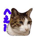 猫の顔相づちスタンプ~大きな手書き文字~(個別スタンプ:26)