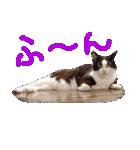 猫の顔相づちスタンプ~大きな手書き文字~(個別スタンプ:27)