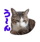 猫の顔相づちスタンプ~大きな手書き文字~(個別スタンプ:30)
