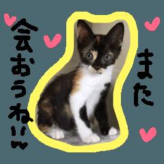 三毛猫キティちゃん♡写真スタンプ