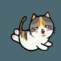 三毛猫のミケちゃん