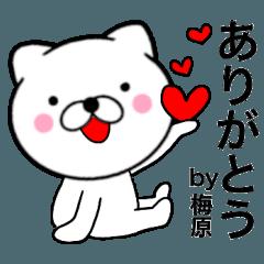 【梅原】が使う主婦が作ったデカ文字ネコ