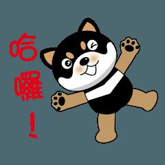 Black Shiba dog - Black Lulu daily