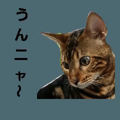 来夢ニャ~ 熊本弁2