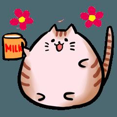 まんまる猫のまんまちゃん