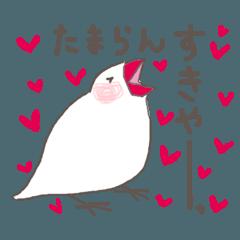 関西弁の白文鳥(LOVE)