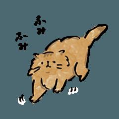 猫のチンチラ*もふろうの日常