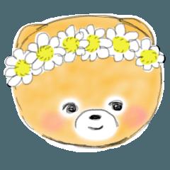 柴犬カットのポメラニアン ポム