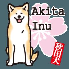 秋田犬ざんまい