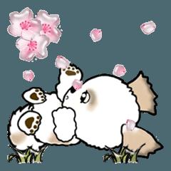 【大きめ文字】シーズー犬の春