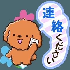 やさしいトイプードル 【敬語編】